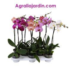 Orquideas en Agralia Plants, Garden Centre, Plant, Planets
