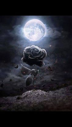 View our website to place order. Take your imagination and creativity to a new level with DIY Paint by Diamond Painting Tag 5 Art lovers here for a chance to get your kit for FREE. Dark Fantasy Art, Dark Art, Gothic Kunst, Gothic Art, Moon Pictures, Beautiful Moon, Rose Wallpaper, Dark Gothic, Moon Art