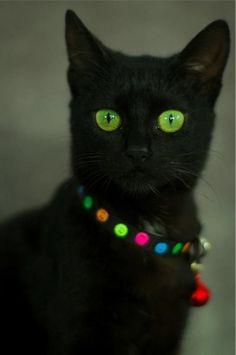 """ad63d3af61 """" dark—secrets  """" (via Black Cats   black cat"""