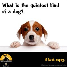 What is the quietest kind of a dog? A hush puppy. Cute Jokes, Funny Jokes For Kids, Corny Jokes, Funny Puns, Funny Sayings, Hilarious, Xmas Jokes, Farm Jokes, Dog Jokes