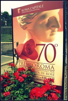 premio della rosa roseto di roma