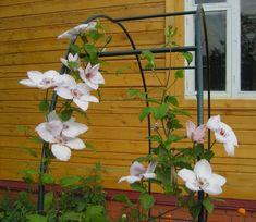 не цветет клематис Garden Design, Wreaths, Plants, Roses, Home Decor, Flowers, Homemade Home Decor, Door Wreaths, Pink