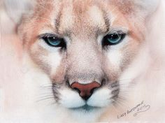 Big cat drawing by Lilly Antoneavic. Beautifully subtle and huge (A1 size). Truly a good example of the range these pencils are capable of.