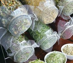 GROW YOUR OWN SPROUTS! My favorite is the glass jar method. Sprouting with this simple system involves soaking your chosen seeds overnight and covering the jar with a mesh screen and rubber band. In the morning drain the soak water and rinse the seeds twice daily, placing them on a rack to drain during the day. Harvest them within three to seven days.
