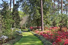 1000 Images About Maclay Gardens On Pinterest