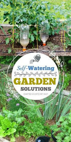 These ideas for automatically watering your garden provide the good, even moisture that most plants appreciate.