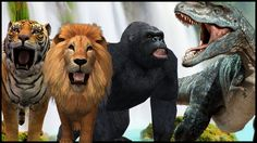 Wild Animals Playing Football | Lion Tiger King Kong Bear Animals Playin...
