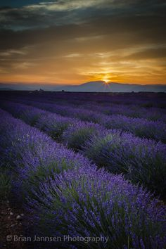 Lavender sunset in southern France~~ by Brian Jannsen