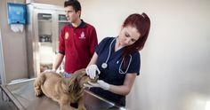 """İBB'den """"Sahipsiz hayvan rehabilitasyon çalıştayı"""" İstanbul Büyükşehir Belediyesi sokak hayvanlarının rehabilitasyonuna yönelik ilgili bakanlıklardan yetkililerin ve 39 ilçe belediyesinin veteriner hizmet sorumlularının da katılacağı çalıştay düzenliyor. Detaylar ajanimo.com'da.. #ajanimo #ajanbrian #hayvan #animal #dog #köpek #cat #kedi"""