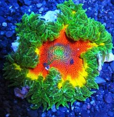 sunburst flower - Google Search