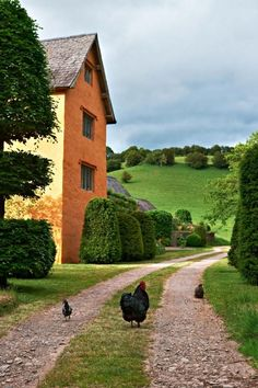 Out for stroll…  Country LIving
