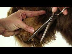 ALAA Australian Labradoodle Grooming Demo