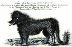 The Monster of Gévaudan was a ferocious beast that killed more than one hundred women and children in south-central France between 1764 and 1770. Ninety eight of the victims killed were partially eaten. The goverment-sponsored hunt for the beast is the basis for the 2001 thriller movie 'Le Pacte des Loups' and descriptions of the beast directly inspired the 1975 erotic movie 'La Bête' directed by Walerian Borowczyk.