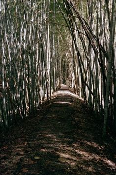 Prattville Alabama Wilderness Park Bamboo Grove Day Trip What To