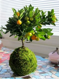 Garden Yard Ideas, Garden Projects, Garden Art, Garden Design, Hanging Plants, Indoor Plants, Art Floral Japonais, Ming Tree, String Garden