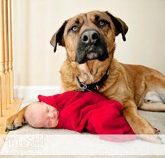Guard dog!  Newborn Photographer | Marie Still Photography