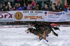 Iditarod dog race : The Iditarod dog sled race in Anchorage