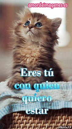 Imágenes en Movimiento de Gatitos de Amor-gatito-tierno