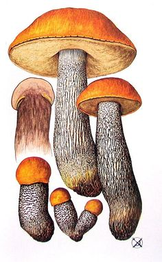 Mushrooms 4 Small Pages Orange Birch by mysunshinevintage