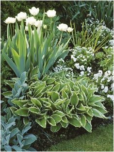 Shade garden - Shade shrubs Elegant Green And White Garden Ideas That You Need To Rebuild Your Garden – Shade garden Moon Garden, Diy Garden, Spring Garden, Dream Garden, Garden Projects, Garden Shade, Shaded Garden, Night Garden, Garden Boxes