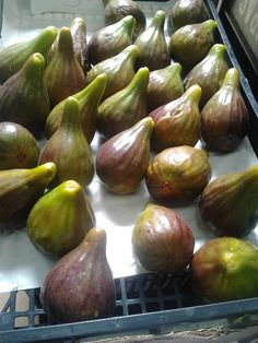 An American in Portugal Tours | Fig Season Is Arriving in Portugal! Portuguese Food Fact Monday