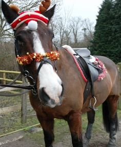 christmas horse costume - Google Search