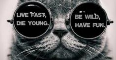 Live fast, die young // be wild, have fun ! ;)