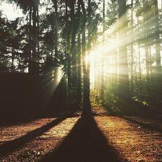 """Instagram media by meshari_kaizen - """"أنا اختار مشاعري تجاه ما يقع من حولي""""  توكيد إيجابي لرفع التحكم في عالمك الداخلي"""