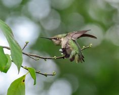 Flying Jewels, God`s Awesome & Gorgeous Creation. Hope Is The Thing With Feathers, Emily Dickinson, Jewels, God, Awesome, Image, Naturaleza, Animales, Dios