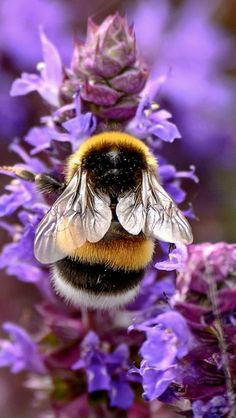Save the bees! Beautiful Creatures, Animals Beautiful, Funny Bird, Animals And Pets, Cute Animals, I Love Bees, Bees And Wasps, Beautiful Bugs, Beautiful Pictures