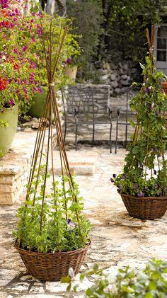 Willow Obelisk Planter - Gardener's Supply Company