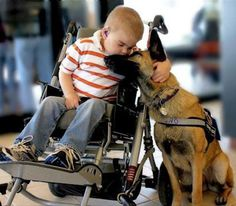 Dogs are called man's best friend for a reason. If only everyone could be as generous, loving, and loyal as these dogs. Animals For Kids, Animals And Pets, Cute Animals, Love My Dog, Puppy Love, Animal Pictures, Cute Pictures, Random Pictures, Military Dogs