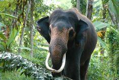 Kavari Raja - Meet the Elephants - Aliya Dung Paper Elephants, Gifts For Friends, Eco Friendly, Meet, Paper, Animals, Animales, Animaux, Elephant