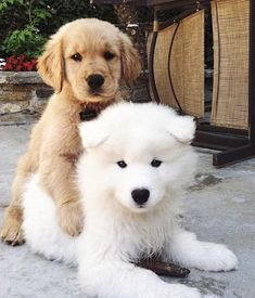 5 Questions You Should Ask Before Having A Puppy Play Date – Welpen Baby Animals Pictures, Cute Animal Pictures, Puppy Pictures, Cute Baby Puppies, Super Cute Puppies, Dalmatian Puppies, Doberman Puppies, Samoyed Dogs, Puppies Tips