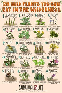 Survival Life Hacks, Survival Food, Survival Prepping, Survival Skills, Outdoor Survival, Magic Herbs, Herbal Magic, Healing Herbs, Medicinal Herbs