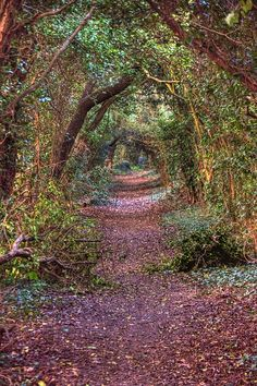 The Enchanted Forest, England