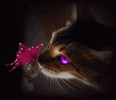 Cat & Butterfly animals colorful eyes cat butterfly neon gif