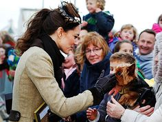A petite Yorkshire terrier braves the wind and cold to catch a glimpse of Kate