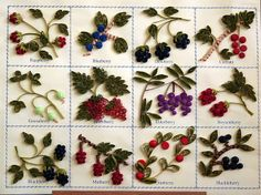 Fruits of the forest    (Explored) by yorkshirelass49, via Flickr