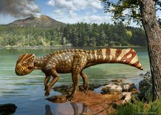 Scientists from South Korea, the United States and Japan analyzed fossil evidence found in South Korea and published research describing a new horned dinosaur. The newly identified genus, Koreaceratops hwaseongensis, lived about 103 million years ago during the late Early Cretaceous period. The specimen is the first ceratopsian dinosaur from the Korean peninsula. The partial skeleton includes a significant portion of the animal's backbone, hip bone, partial hind limbs and a nearly complete…