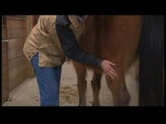 Equine Massage Benefits : Equine Massage: Quarter Horses