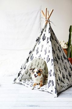 Omg I need this for my aussie.. is this a dog bed?! Or I guess I should say teepee ? Lol