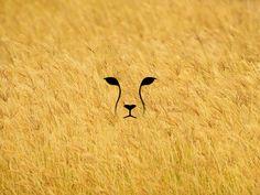 Cheetah by Ion Țurcanu Bunny Tattoos, Mini Tattoos, Small Tattoos, Cheetah Logo, Cheetah Tattoo, Silhouette Tattoos, Animal Silhouette, Horse Tattoo Design, Tattoo Designs
