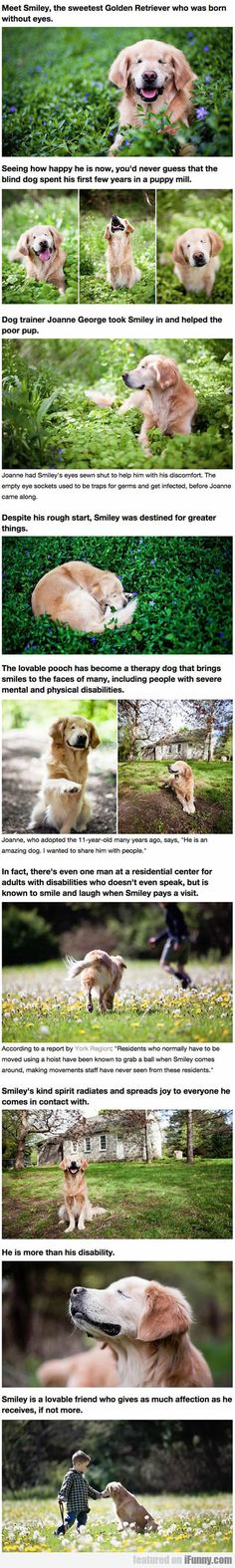 Smiley - The Golden Retriever Born Without Eyes