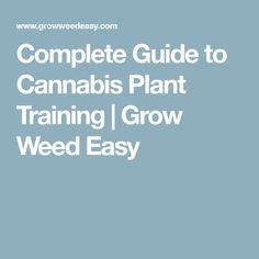 Complete Guide to Cannabis Plant Training | Grow Weed Easy