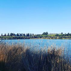 #lakepertobe #warrnambool #victoria #australia #water #lake #spring #reeds #trees #bluesky #nofilter #pretty #view #love3280 #live3280 by chantaz02