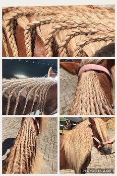 When you have to much spare time... Make tons of braids in your horse's mane, but do not irritate him! - Jupinkle