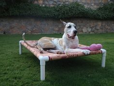 great idea for a raised dog bed.