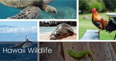 We've listed 12 of the most common Hawaii wildlife for a quick fact reference to impress your vacation companions. #hawaiiwildlife #wildlife #hawaii Maui Vacation, Hawaii Travel, Deer Bedding, Hawaiian Monk Seal, Hawaiian People, Maui Activities, Dolphin Tours, Ocean At Night, Under The Ocean