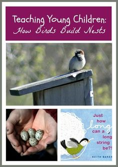 The best bird feeder, children's books, informative videos, and a teaching strategy for teaching young children about bird watching and nesting birds | BookSprout